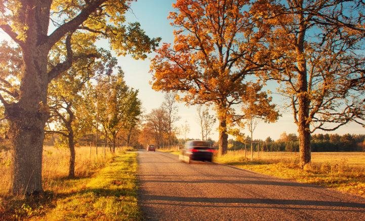 10 tips om veilig de weg op te gaan tijdens de herfst