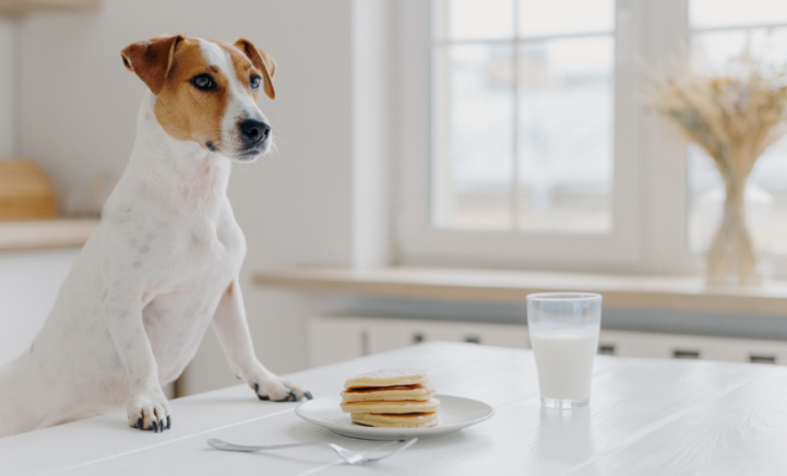 Baasje en beestje fit: zo maak je gezonde pannenkoeken voor je hond!