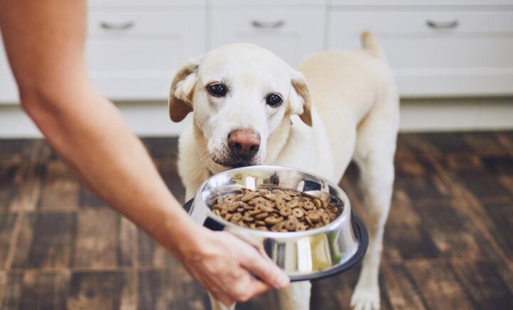 Hierom moet je eigenlijk elke dag Zwarte Komijn over de hondenvoeding strooien!