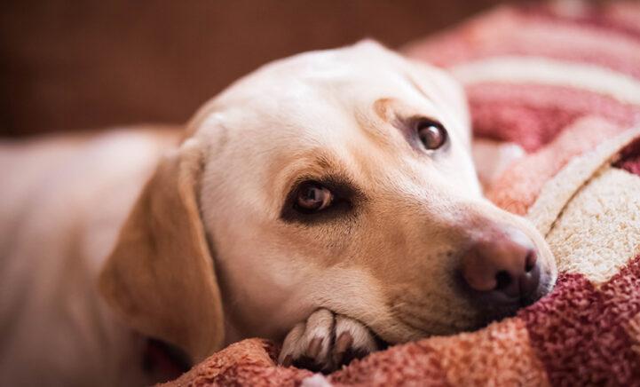 BEWEZEN: Honden gebruiken opzettelijk hun puppy-ogen