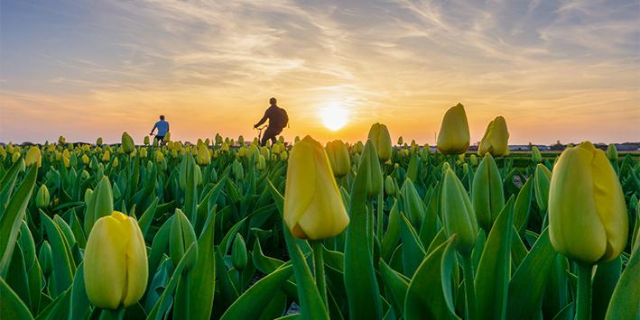 Laat je betoveren door het grootste bloembollengebied ter wereld!