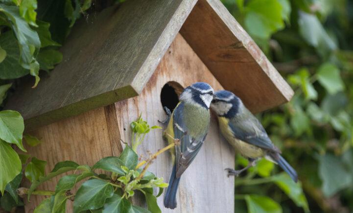 HEBBEN: De leukste vogel- en insectenhuisjes voor bij jou in de tuin!