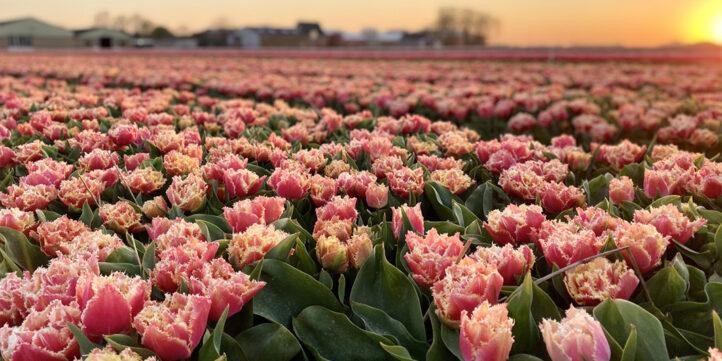 Maak de mooiste bloemenfoto en win een weekendje weg bij Droomparken!