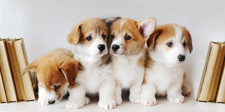 100%NL Magazine puppy