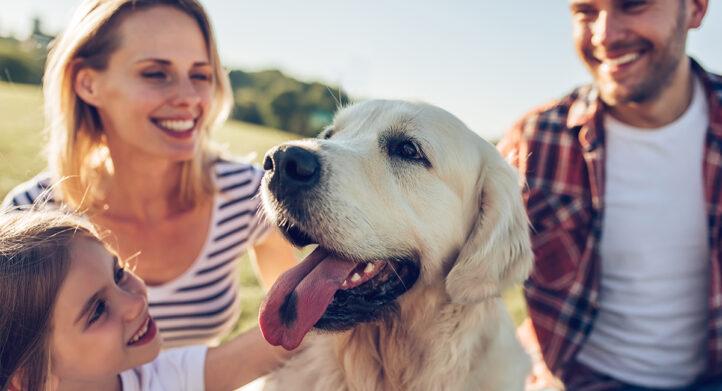 100%NL Magazine honden evenement