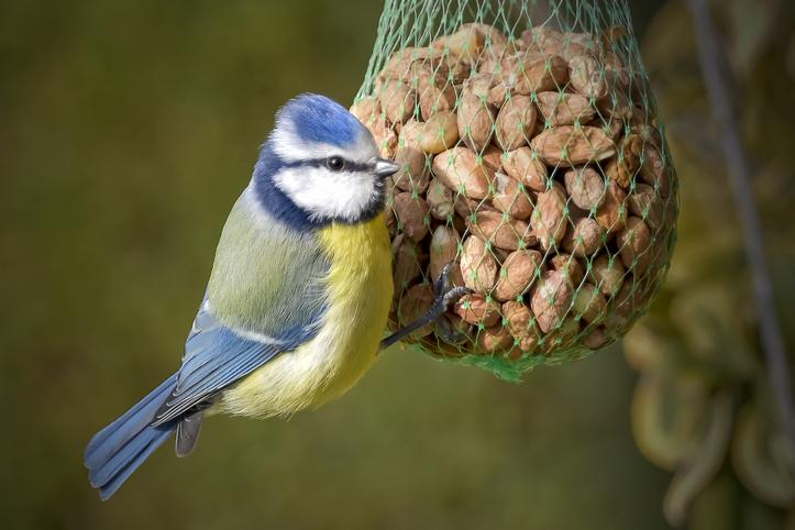 Met deze leuke voederhuisjes help jij de vogels de winter door!
